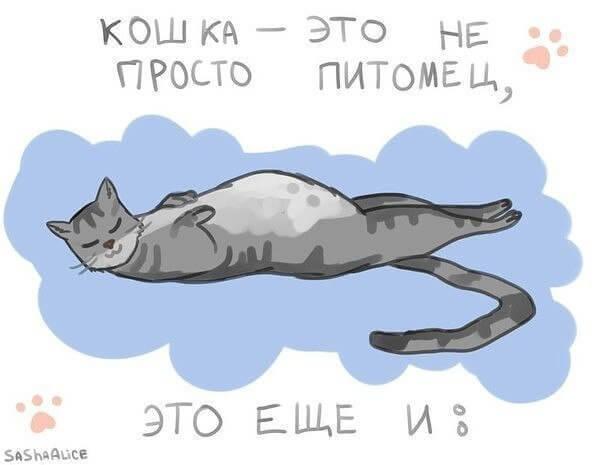 питомцы кошки