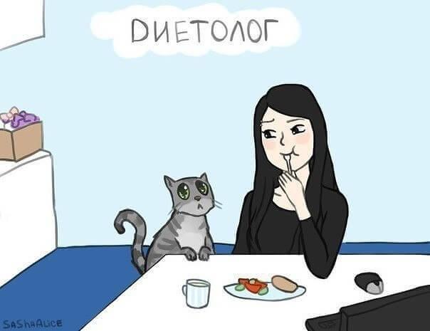 кот диетолог