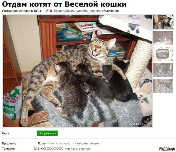 продам котят авито