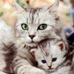 Стих про кошку Мурку (Мария Попова)