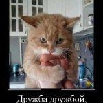 Смешные демотиваторы с котами
