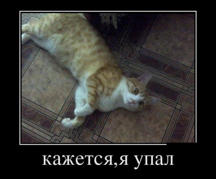 Юмор про котов