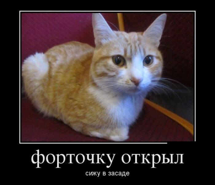 изображение с кошками