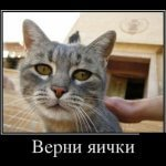Прикольные демотиваторы с котами и кошками