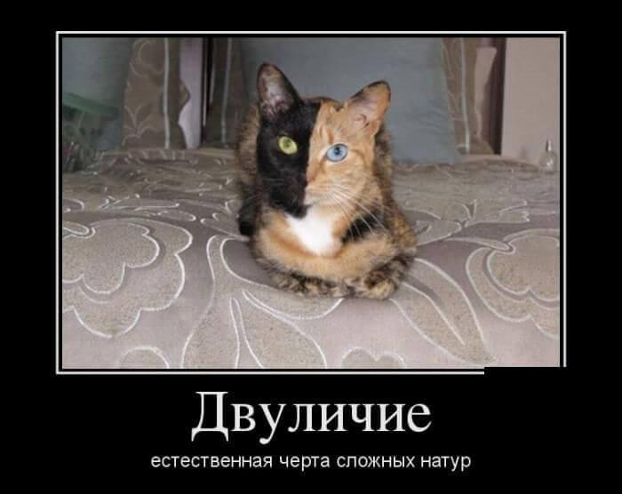 демотиваторы котики