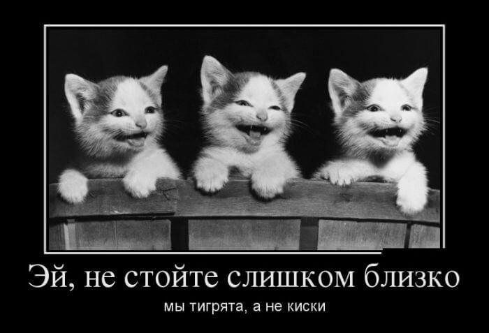 прикольные картинки с котами и кошками