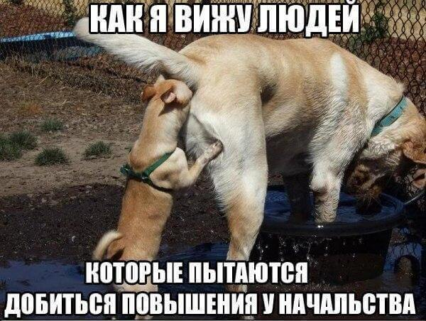 смешные картинки животных