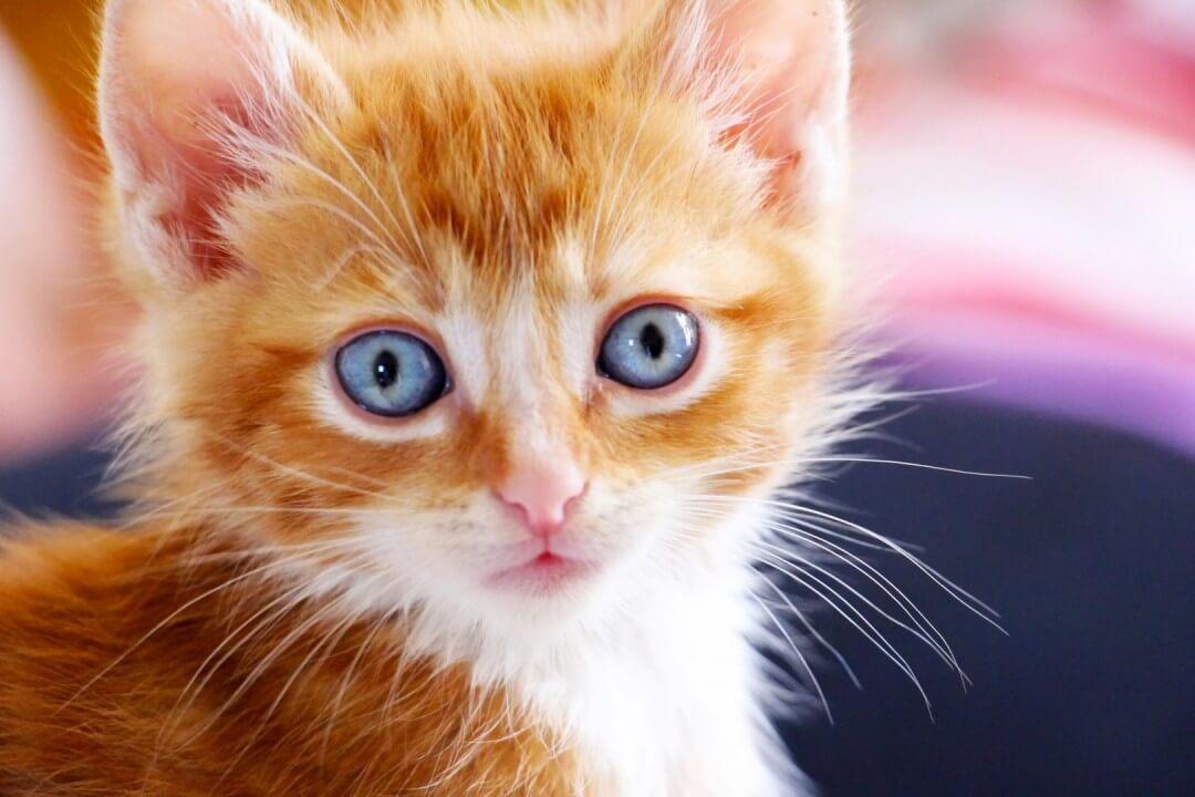 притча про котёнка
