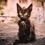Уродливый кот - стих (текст)