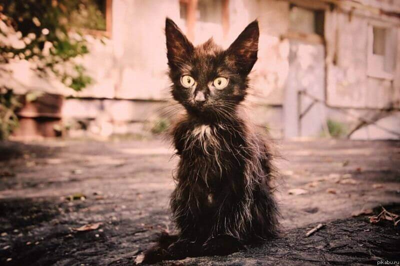 Уродливый кот кто автор