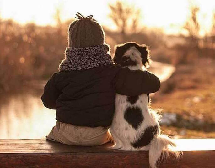 лучшие короткие стихи о собаках