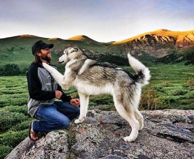 короткие стихи про собак грустные