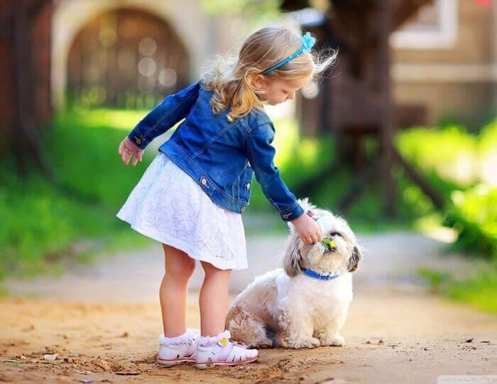 красивые стихи про собак