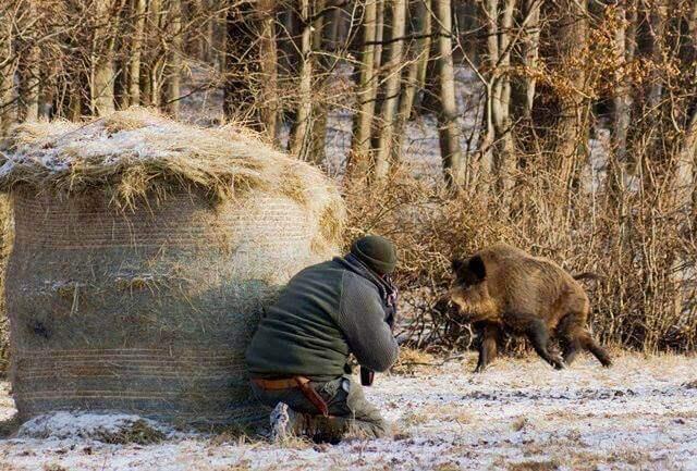 стихотворение про охоту и охотников
