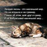 Стихи о кошках про кошек