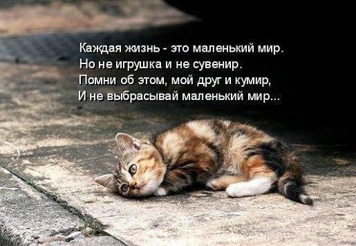 красивые стихи о кошках