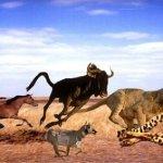 ТОП 10 самых быстрых животных в мире