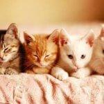 Популярные породы кошек с фотографиями и названиями