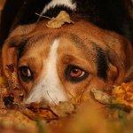 Есенин - стихи про собаку