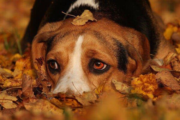 есенин стихотворение песнь о собаке