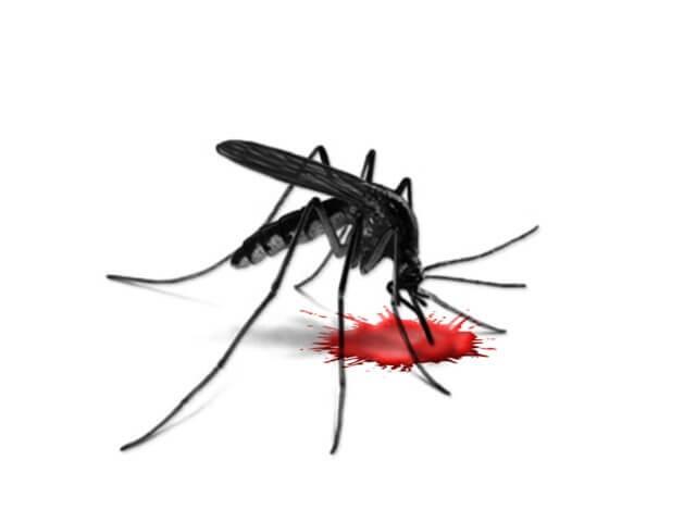 комар насекомое укус