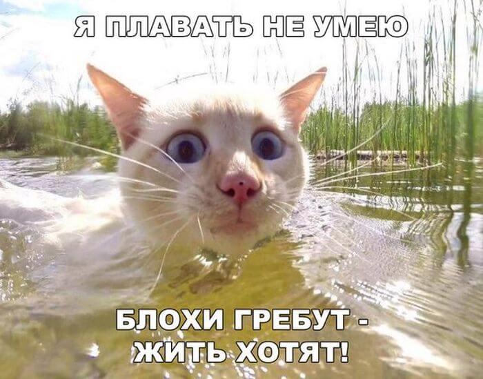 картинки прикольные смешные