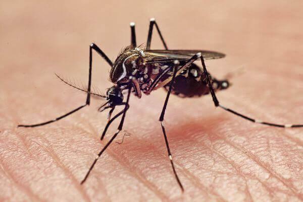 сколько укусов может сделать комар за свою жизнь