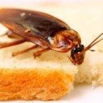 Почему тараканы не боятся радиации
