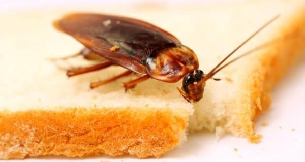 тараканы не боятся радиации