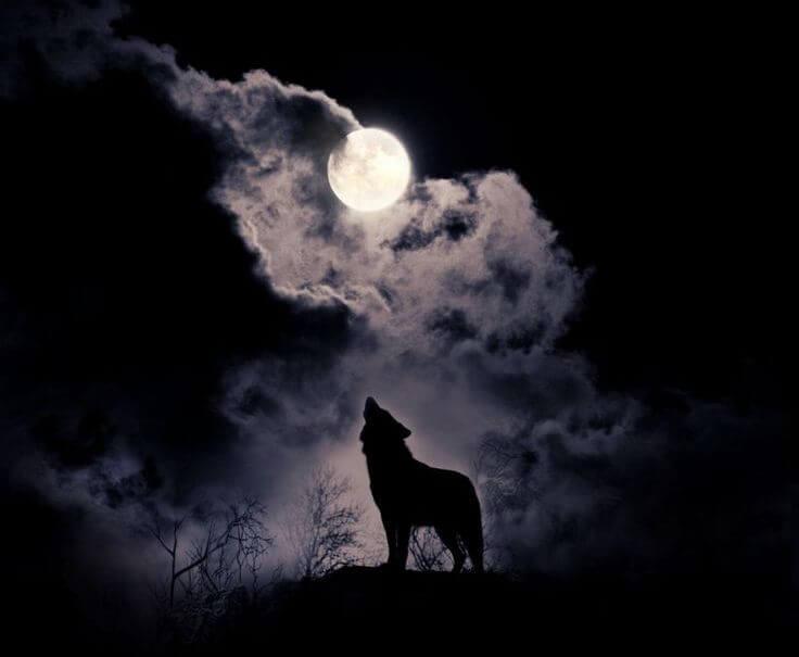 Почему волки воют на луну ответ