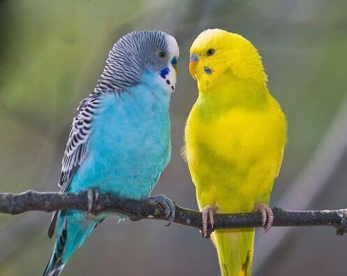 почему говорящий попугай говорит