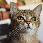 Поверья и приметы про кошек