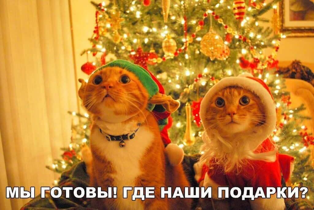 хороший новогодний юмор
