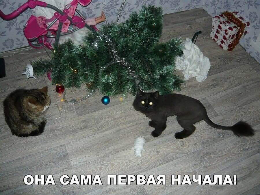новогодние приколы новый год