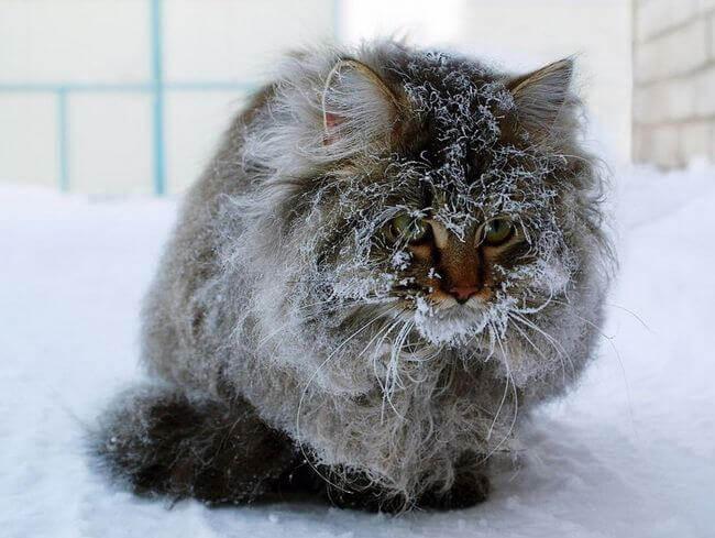 рассказ про больного уродливого кота
