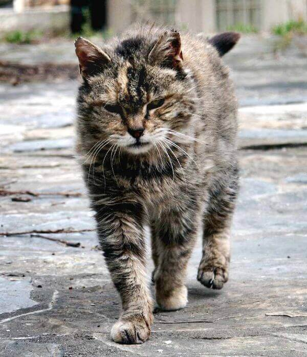 трогательная история о бездомном коте