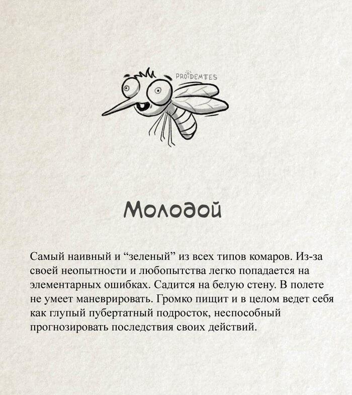 Молодой комар и его укусы