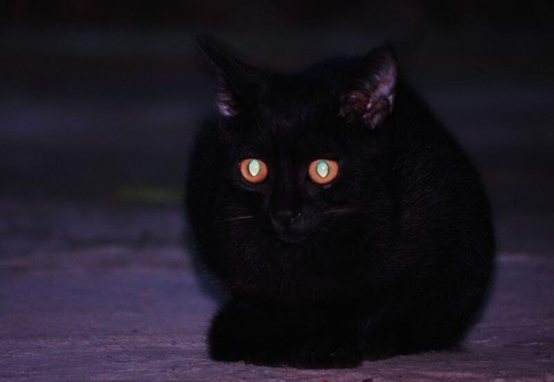почему у кошек светятся глаза красным