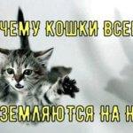 Почему кошки всегда приземляются на лапы