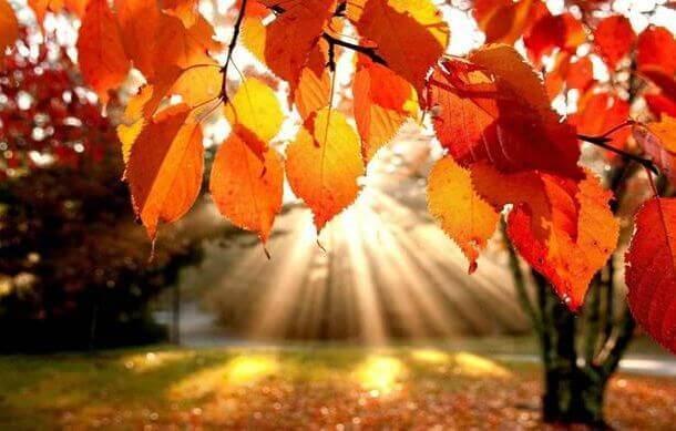 осень стихи короткие красивые
