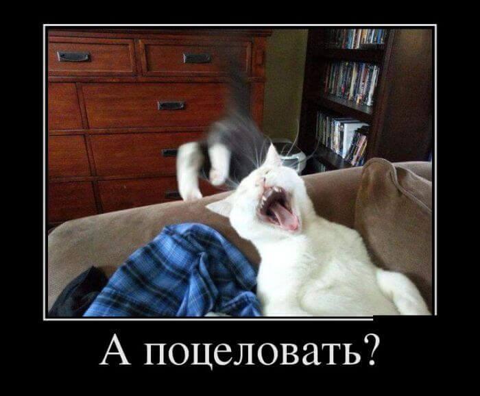 юмор кошки