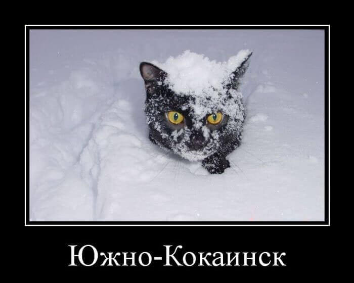 кошачьи демотиваторы