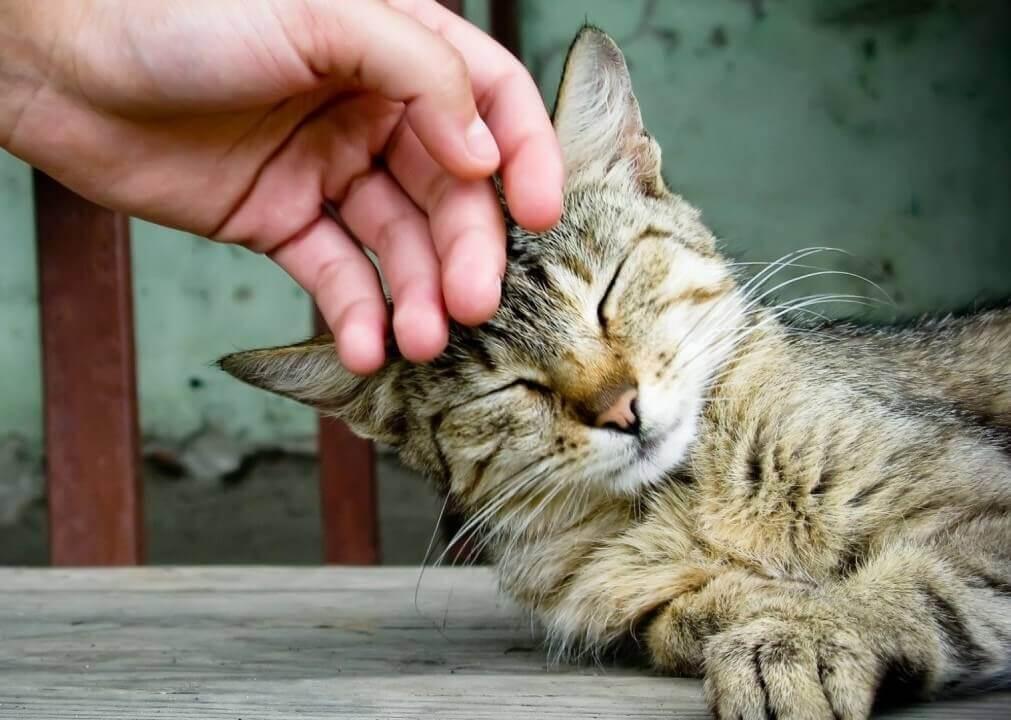 грустные стихи о котах