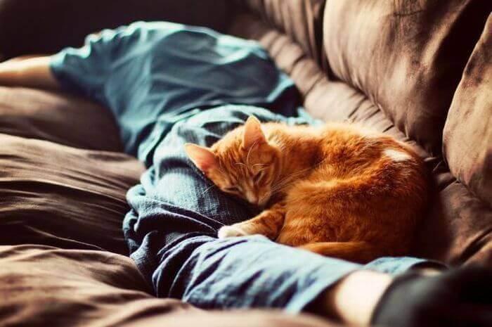 Грустные добрые стихи про котов и кошек