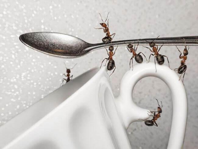 как вывести муравьёв с кухни дома