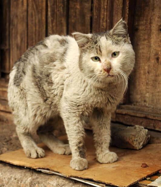 душещипательный рассказ про кота