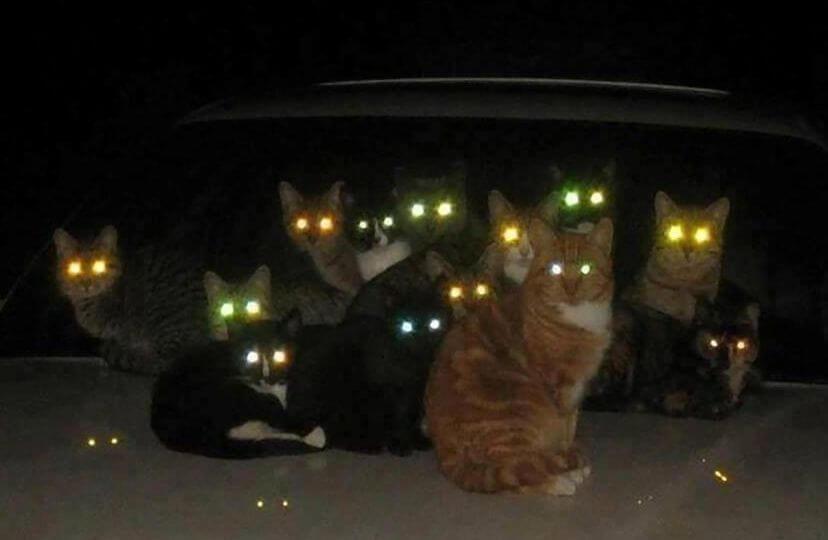как светятся глаза у кошки в темноте