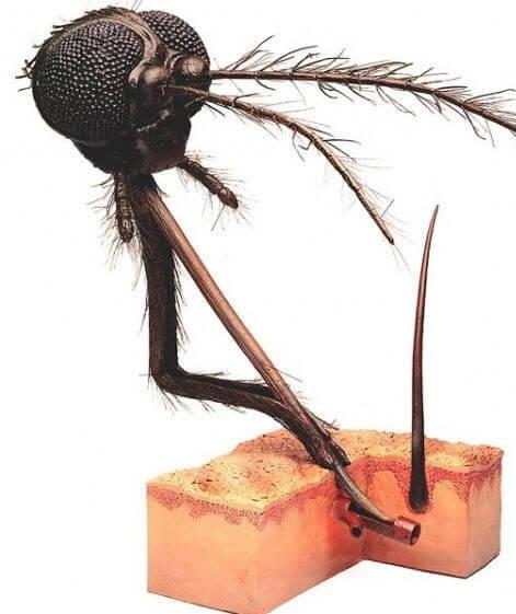 сильно чешется укус комара